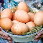 17171 Куриные яйца, всё, что нужно знать о яйцах
