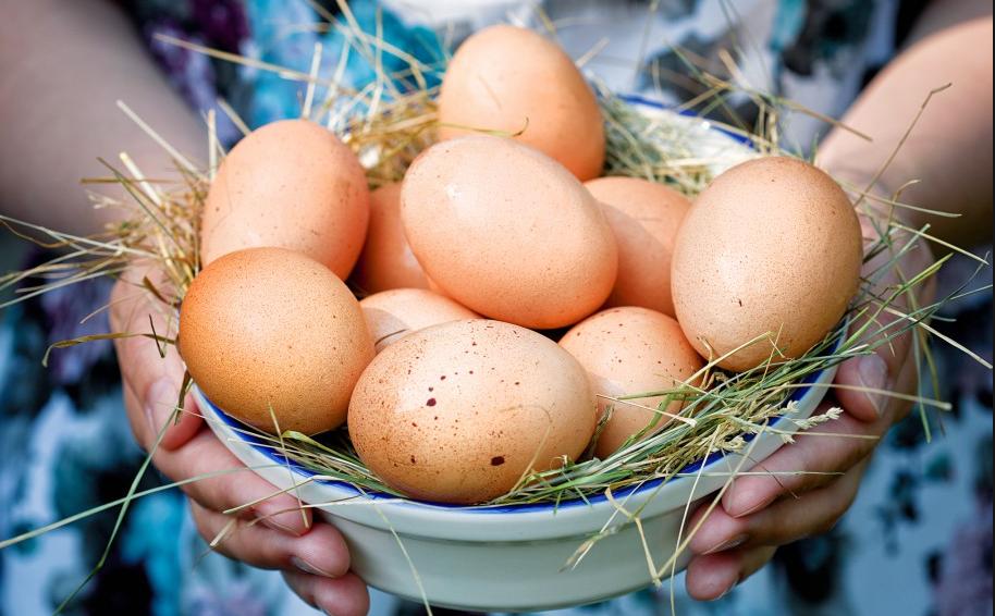 Куриные яйца, всё, что нужно знать о яйцах