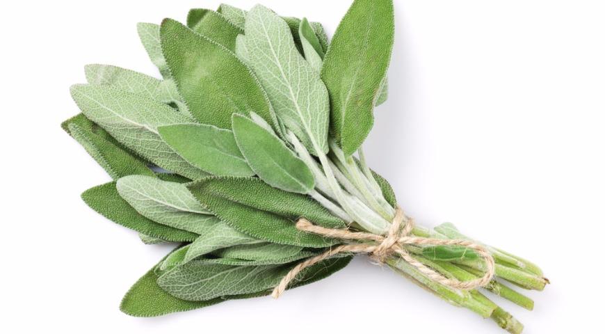 Пряные травы. Как лучше хранить и с чем готовить