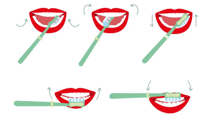 25 неожиданных фактов о зубах, и каждый – правда!