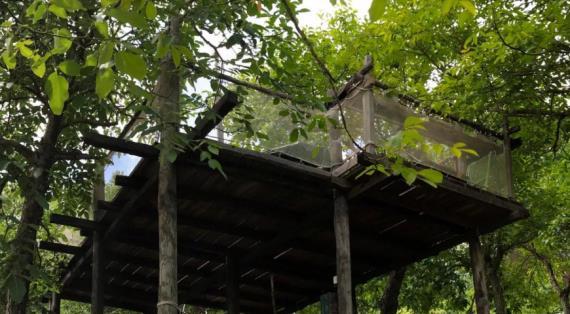 18566 Как выглядит и работает ресторан на дереве. Видеорепортаж с места событий
