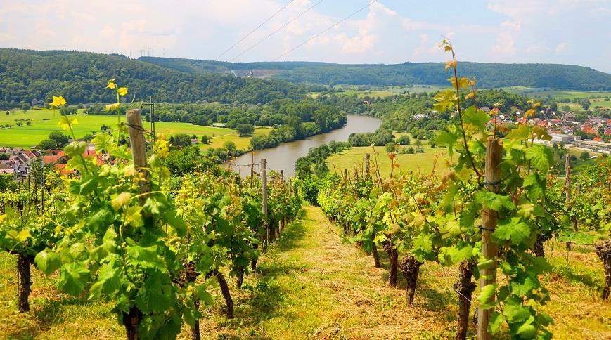 Гастрономическое путешествие по Германии с традиционными немецкими винами